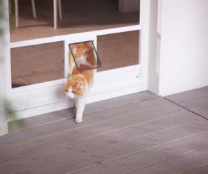 Insektenschutz Katzenklappe